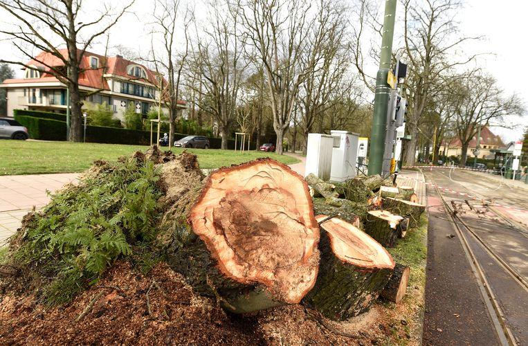 De jaarringen van bomen verraden heel wat over de leeftijd van een boom én zijn geschiedenis.