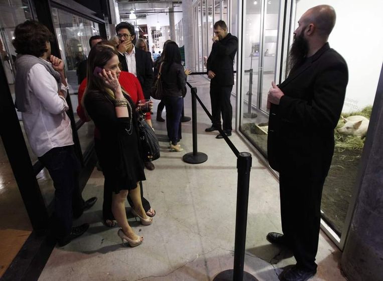 Bezoekers bekijken de installatie waarin Kim met twee varkens leeft. Beeld reuters