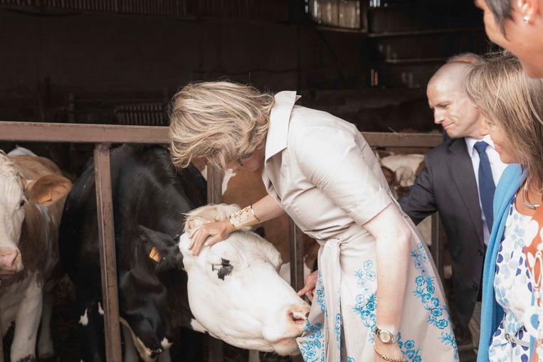 De koninklijke rok lijkt een lekker brokje voor de koe