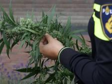 Man wil politie te slim af zijn en gooit hennep op straat als agenten voor de deur staan