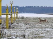 Faunabeschermers schrikken van ontheffing doden dieren bij vliegveld Twente