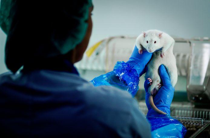 Farmaceuten moeten nu nog op twee diersoorten - ratten en konijnen -  aantonen dat de medicijnen niet schadelijk zijn voor het ongeboren kind