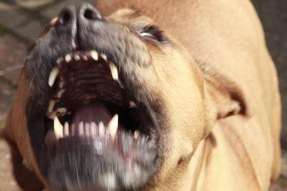 Kind zwaargewond na aanval pitbull in Attenhoven