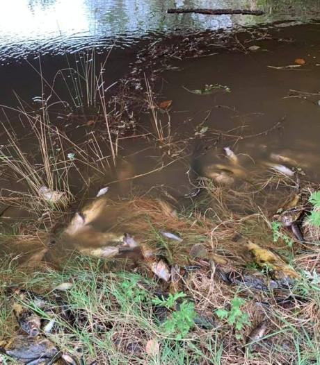 Massale vissterfte in Australië nadat as van bosbranden in rivier stroomt