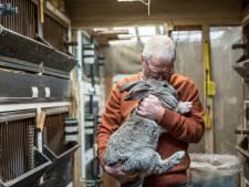 De fokker van Vlaamse reuzen vergrijst en dat knaagt aan Lochemer Henk Hammink