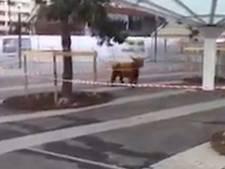 Ontsnapte koe zet boerderijbeurs Parijs op stelten