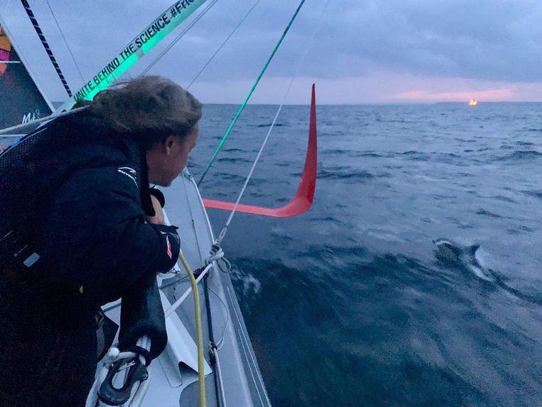 Een dolfijn hield het zeiljacht even gezelschap