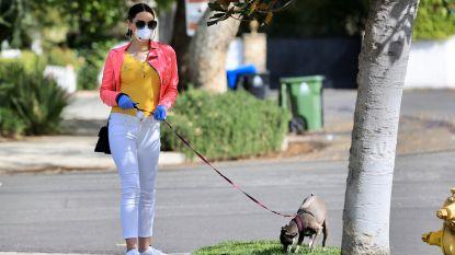 Geen wetenschappelijk bewijs dat mens besmet kan geraken door huisdier