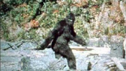 """Amerikaan schiet bijna voorbijganger dood in bos: """"Ik dacht dat je Bigfoot was"""""""
