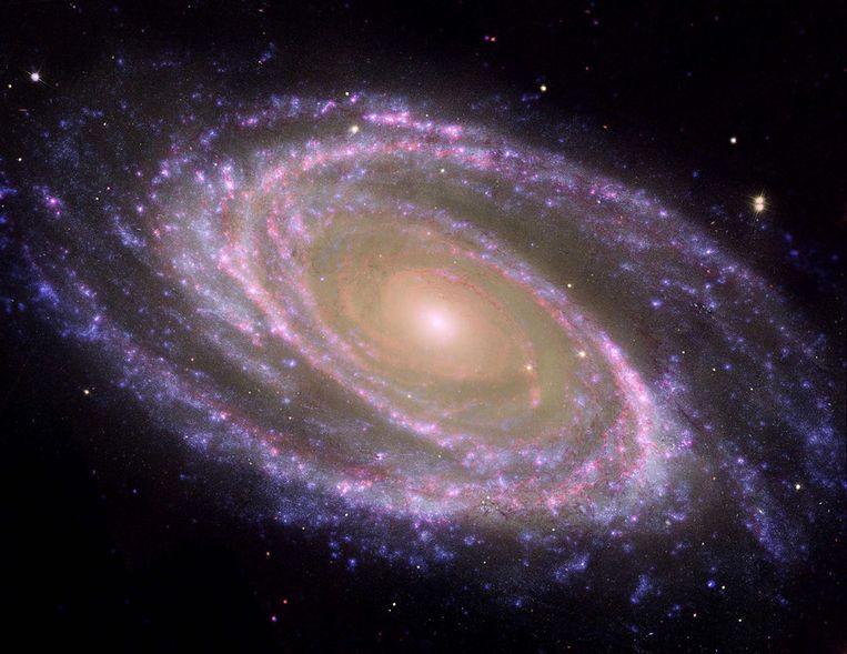 Deze afbeelding van Messier 81 werd samengesteld uit beelden van NASA's Spitzer, Hubble en Galex. Messier 81 is een spiraalvormig sterrenstelsel, het is het helderste lid van een groep melkwegstelsels die bekend staan als de M81-groep. In 1993 werd een supernova waargenomen in het stelsel. Een supernova is een ster die aan het einde van zijn bestaan explodeert. Bij zo'n uitbarsting wordt een enorme hoeveelheid licht uitgestraald. Beeld afp