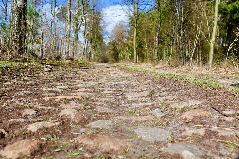 Flintenweg langs het Drouwenerzand Beeld Flip van Doorn