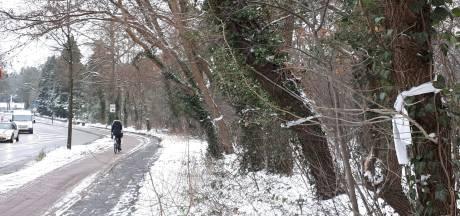 Bomenkap voor rondweg uitgesteld tot dinsdag