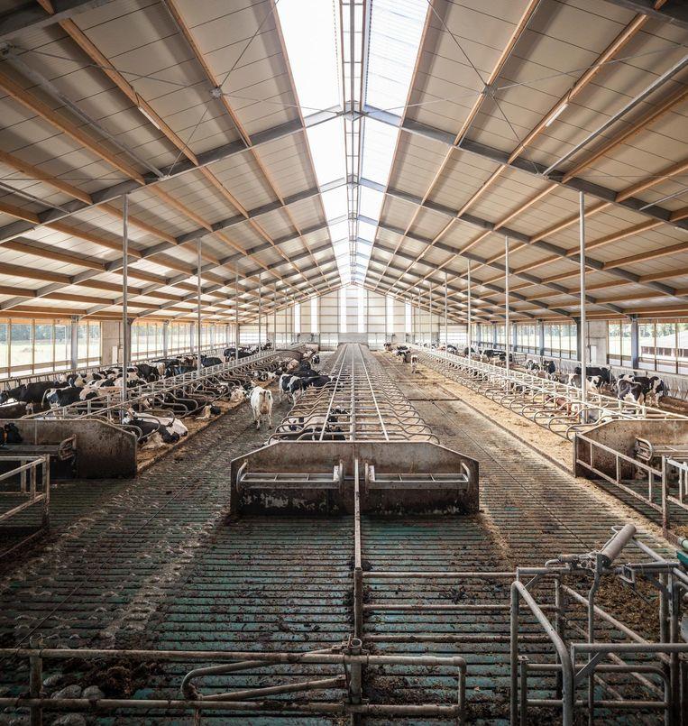 Een halflege stal van een boer uit Raalte die in de problemen kwam door de fosfaatregels.  Beeld Harry Cock