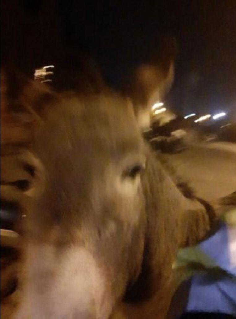Natacha Devrieze deelde deze foto van de ezel als bewijs.