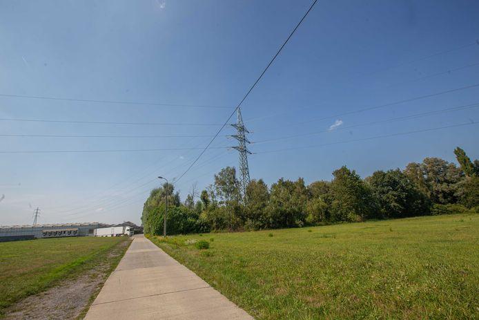 De bomen rond de pyloon zullen gekapt worden.