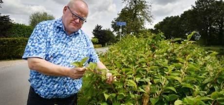 Raadslid uit Albergen strijdt al drie jaar tegen agressieve planten