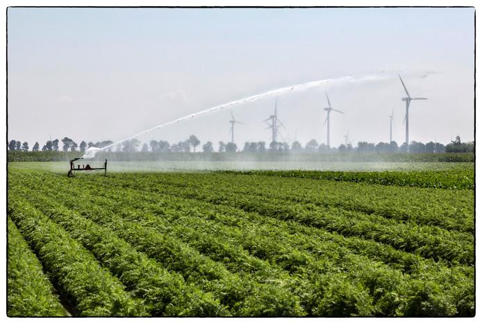 Landbouw in Flevoland.