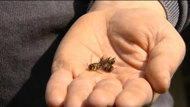 Imker verliest in één klap duizend bijen