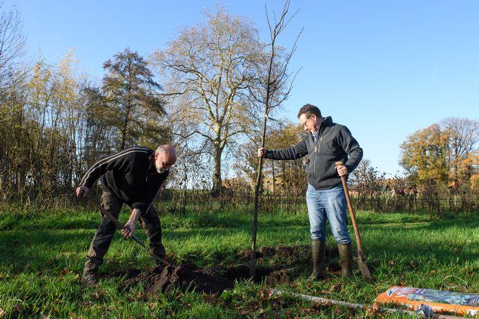 Bosbaas Jan Kistemaker en eigenaar Just Schimmelpenninck van Landgoed Westerflier planten een 'pronkboom' die symbool staat voor vier- tot vijfduizend nieuwe bomen.