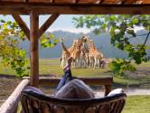 Beekse Bergen klaar voor opening nieuwe Safari Resort