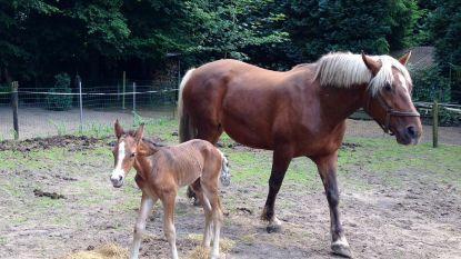 14 maanden cel na belaging gepensioneerd koppel voor paard