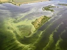 Welke invloed heeft blauwalg op de landbouwgewassen?