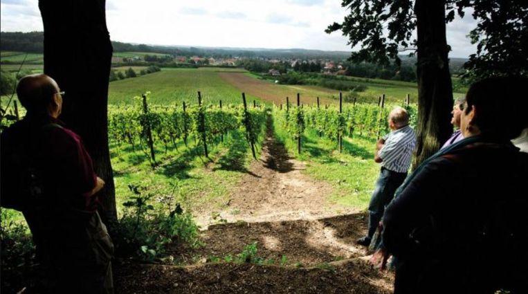 Wijngaarden in Hoegaarden aan de P. Vanmolstraat (foto wandelclub Hoegaarden)