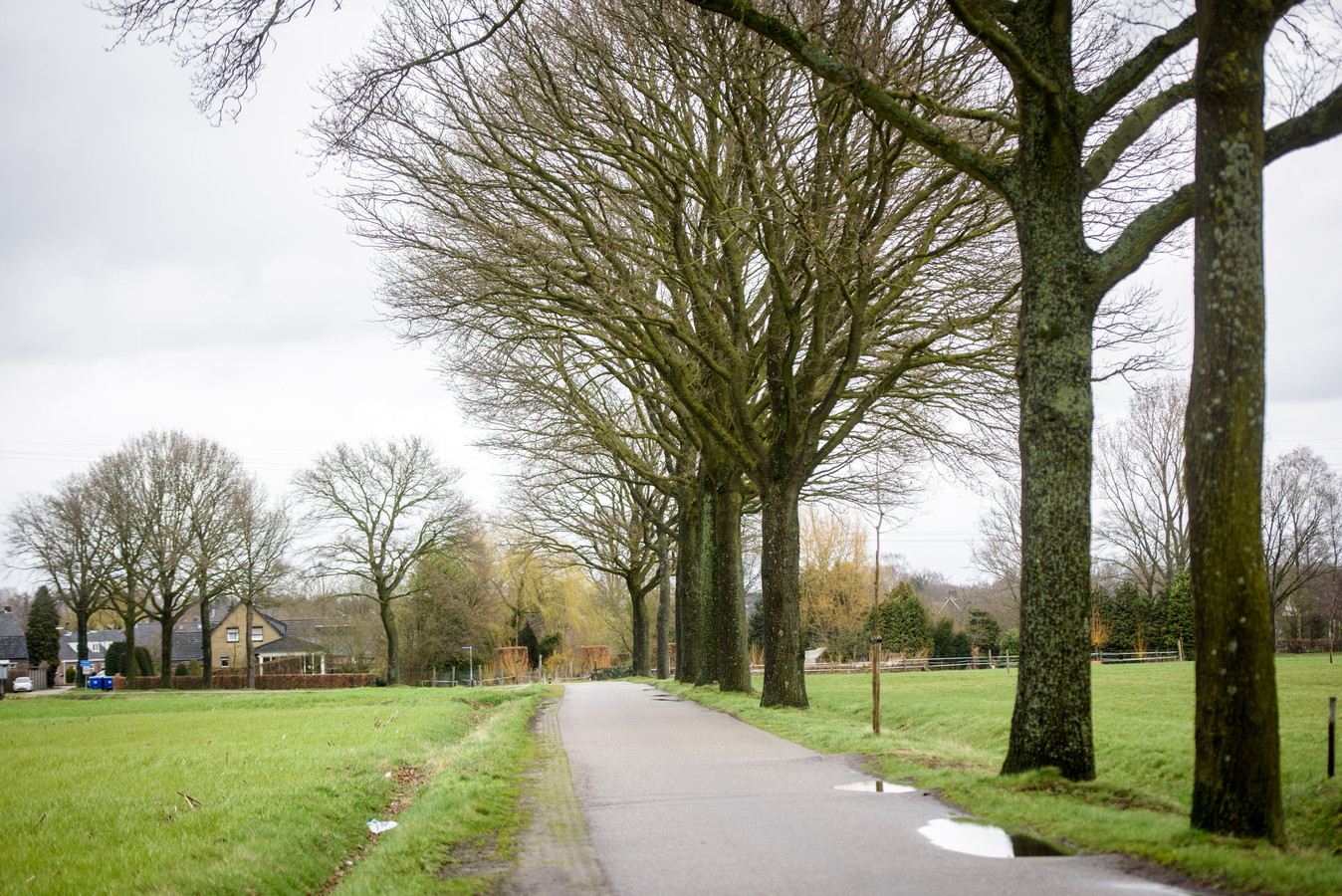 De bomen op het Kruis in Heeze zijn een gewilde plek voor vleermuizen. Rechts vooraan twee van de drie bomen die weg moeten.