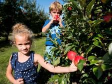 Leren dat appels niet in de supermarkt groeien op Zelfplukdagen in Waverveen