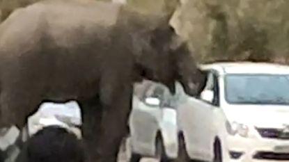 Olifant heeft een hongertje en brengt enorme schade aan auto toe