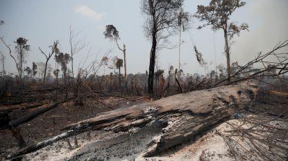 WWF wijst op link tussen coronavirus en vernietiging van de natuur