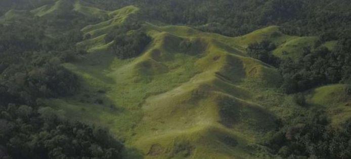 De balsabomen moeten een grasland in Noord-Sulawesi terugdringen.