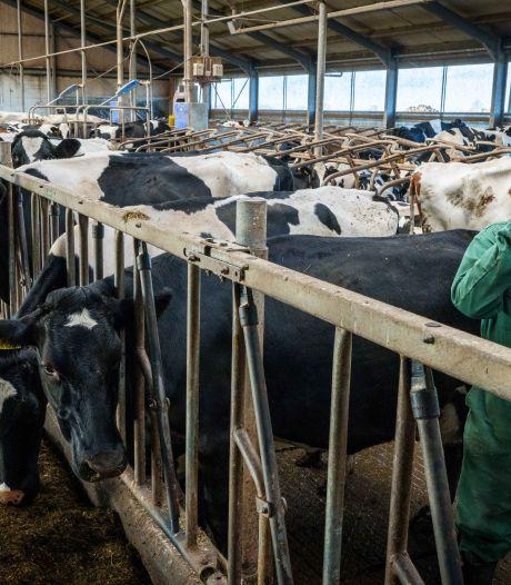 Boer uit Blokzijl voelt zich met collega's klemgezet door provincie: 'Onze bedrijven komen op slot te staan'