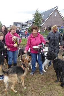 Lopikse honden uitgelaten over 'dierendagcadeau': eindelijk een speelweide