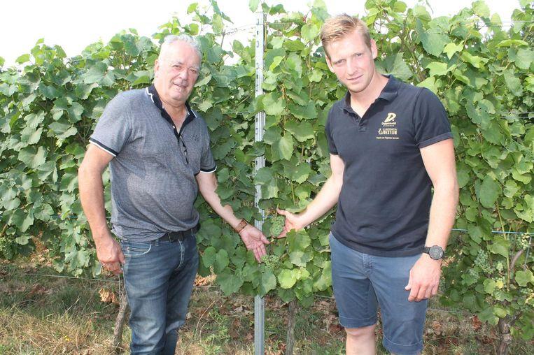 Eric Geyssens en Sam Dehandschutter tussen de wijnranken van Dappersveld.