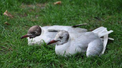 Droogte en warmte nefast voor vogels rond Damvalleimeer