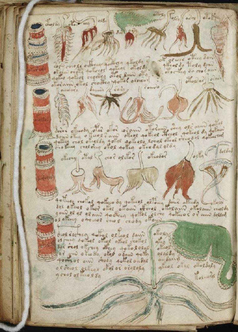 Een pagina uit het Voynich Manuscript