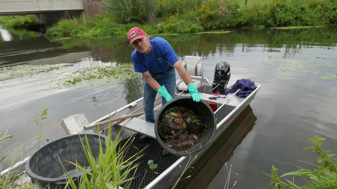 André van Breugel van Waterschap De Dommel schepte vandaag, dinsdag 15 augustus, tientallen dode eenden uit de Dommel in Boxtel