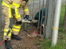 Brandweer redt ree uit hekwerk in Doetinchem