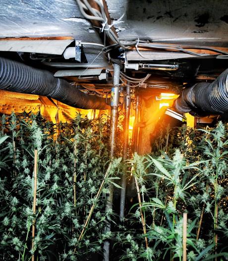 Grote hennepkwekerij ontdekt in autobedrijf Tilburg: ingang verstopt onder brug in werkplaats