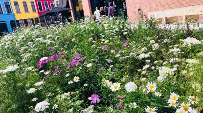 Groen wil niet-functioneel gras vervangen door wilde bloemenperken
