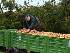 Op zoek naar werk? Neder-Betuwe en Buren vragen om te komen helpen met de appel- en perenoogst
