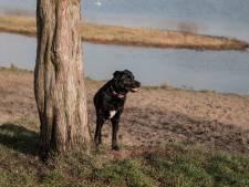 SP Woerden: schrap hondenbelasting