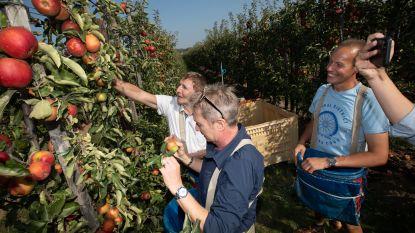 """""""Je moet appels plukken zoals je mij behandelt: zorgzaam, en het steeltje laten hangen"""": Luc Appermont duikt de fruitteelt in onder toeziend oog van Bart Kaëll"""