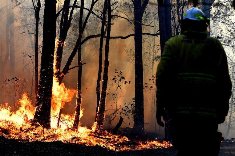 Australië beleeft een catastrofaal bosbrandseizoen, waar geen einde aan lijkt te komen.  Beeld AFP
