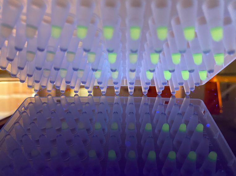 De sneltest van TNO maakt onder meer gebruik van UV-licht: als een monster groen oplicht, betekent dit positief getest op corona. Beeld TNO