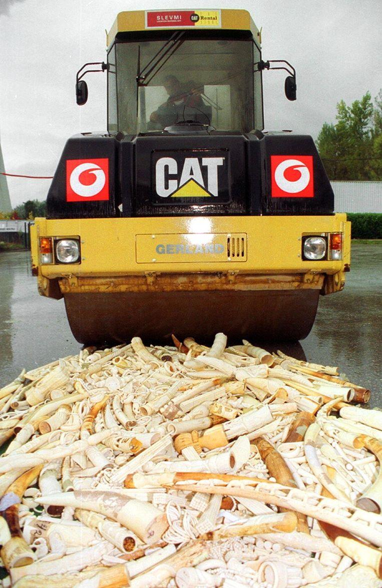 Een partij in beslag genomen ivoor wordt vernietigd. Beeld AFP