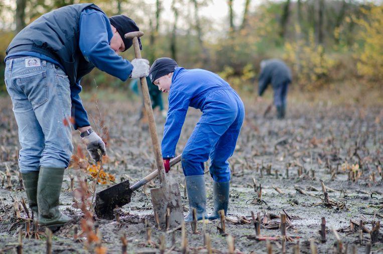 Regionaal Landschap Rivierenland wil inwoners van Hemiksem sensibiliseren om autochtone bomen en struiken aan te planten.