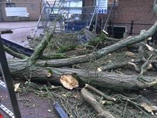 Eeuwenoude gingko verliest tak in harderwijk