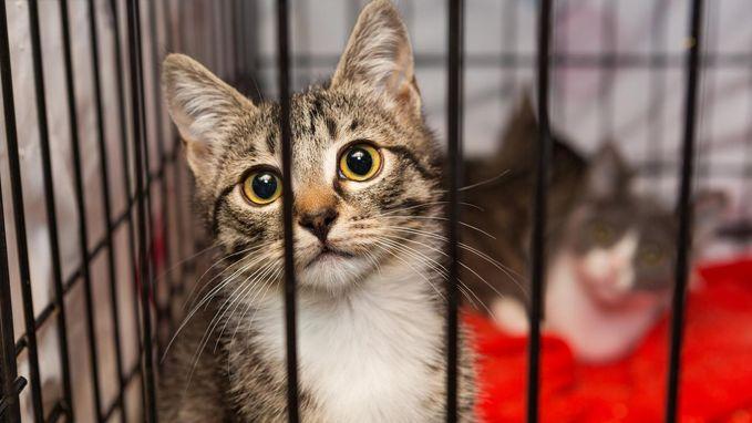 Dierenwinkels uit Californië mogen alleen geredde dieren verkopen